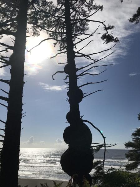 côte Pacifique de Olympic Peninsula