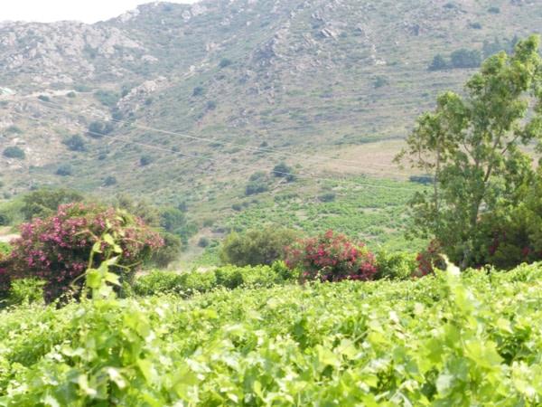 Au milieu des vignes