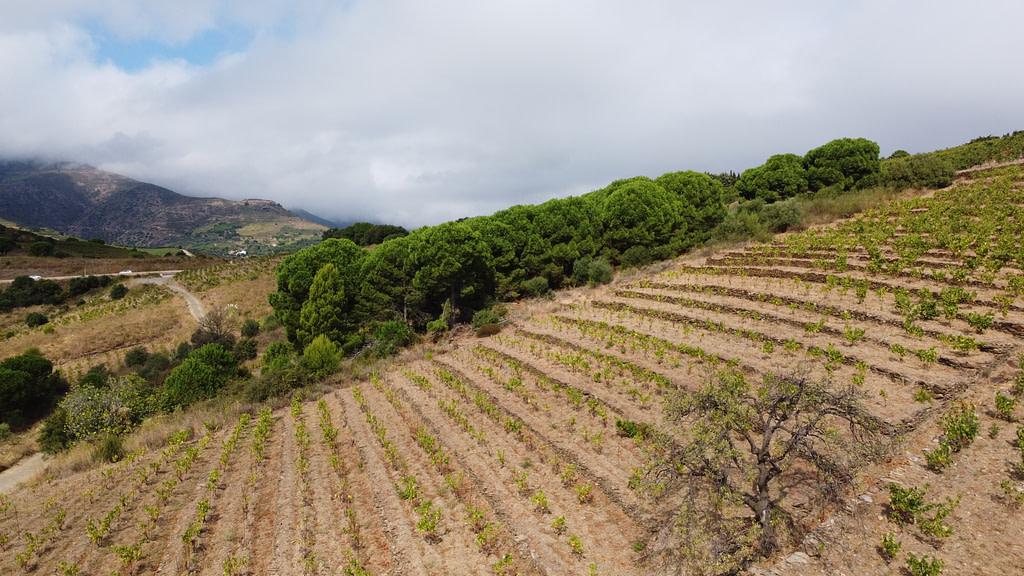Vignoble de Banyuls