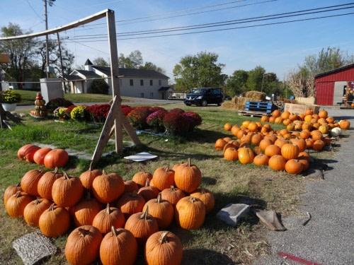 Sur la route de Chattanooga  vente de citrouille pour Halloween