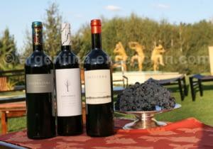 vins-antucura