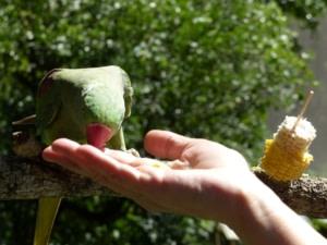 Bird World,