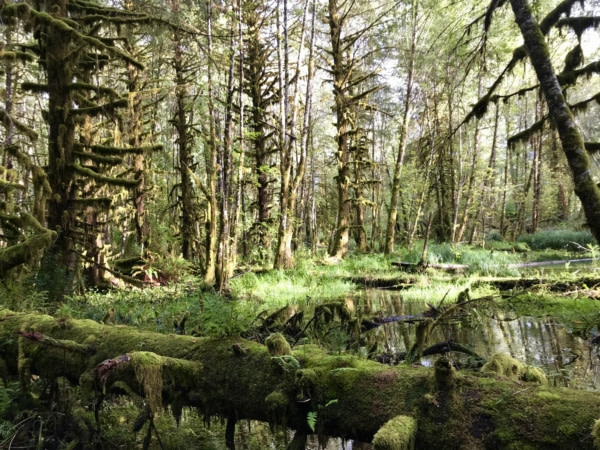 Visite National Park Olympic Quinault Rain Forest