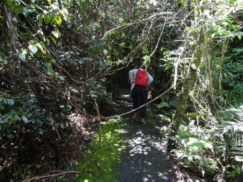 Petite marche dans la forêt de Dorrigo