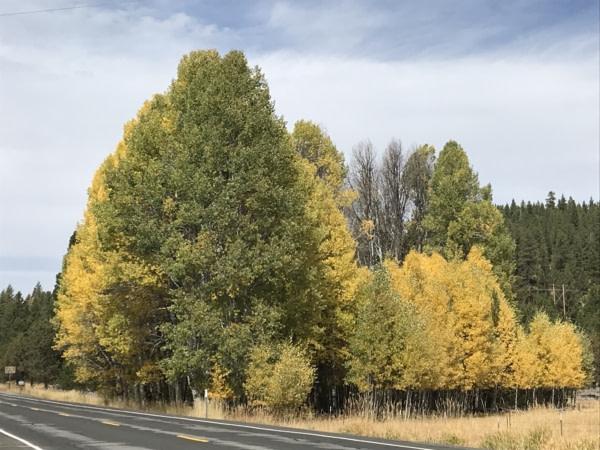 Les couleurs de l'automne arrivent