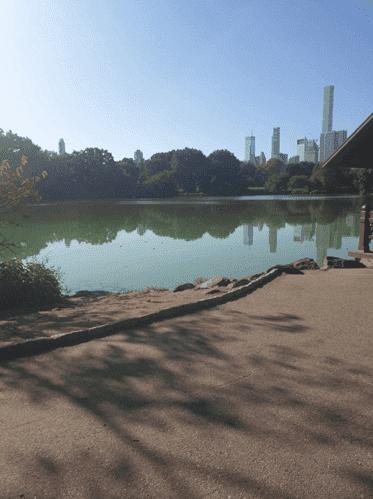 """""""Central Park, l'un de mes coups de coeur de New York"""""""