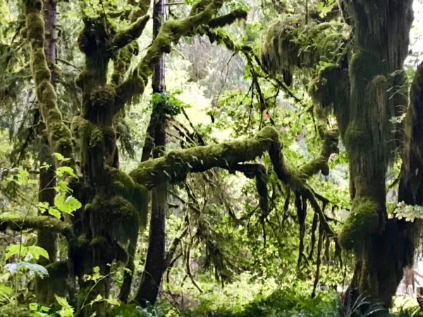 Visite National Park Olympic Visite National Park Olympic Quinault Rain Forest