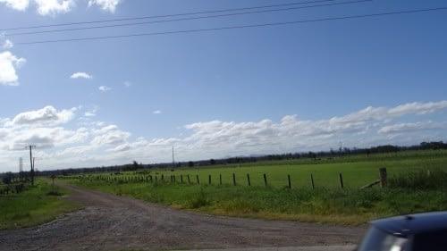 Sur la route de Dorrigo NP