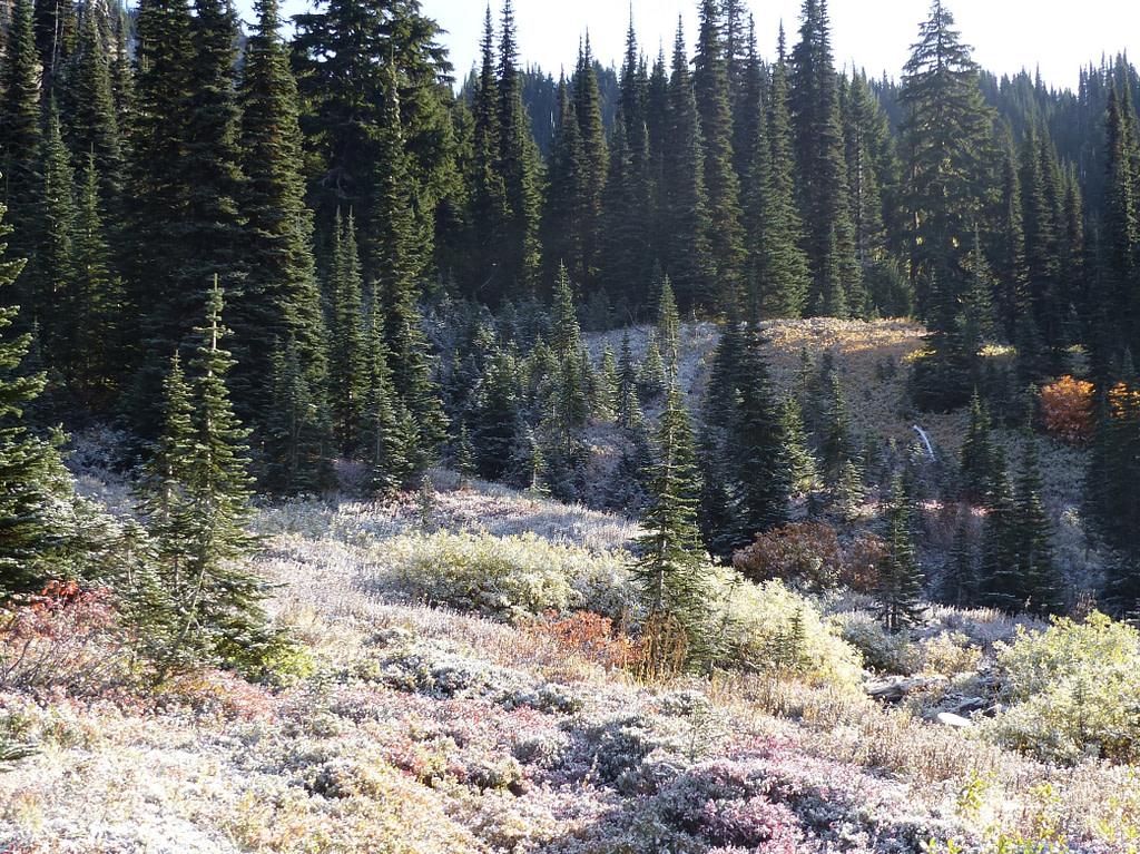 Paysage enneigé du Mont Rainier