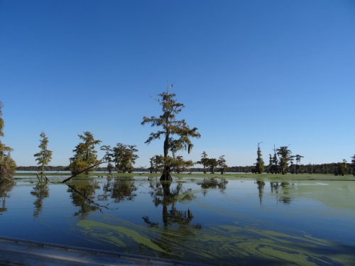 Sur la route de Lafayette Lake Martin