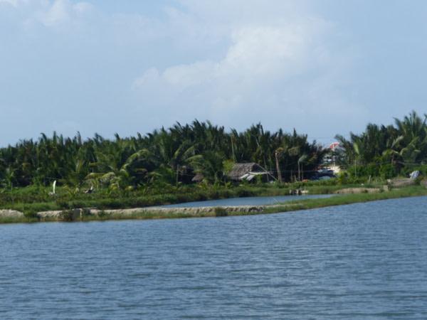 Paysage autour de Hoi An parc à crevettes