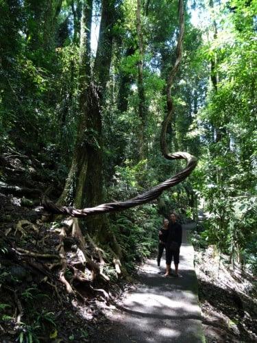 Forêt de Dorrigo